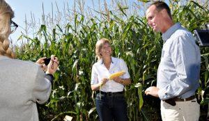 Програш ГМО у Європі – перемога для екологічних організацій